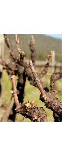 Define the Vine - Pruning Masterclass