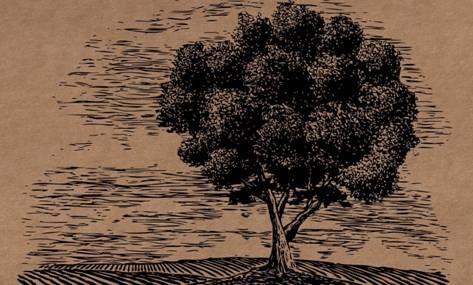 15 Trees Donation